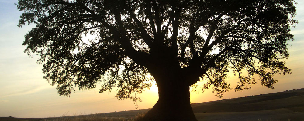 El roble y la rama dorada