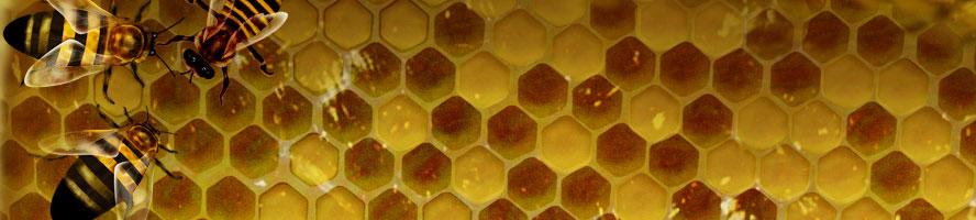 abelles.AG-10