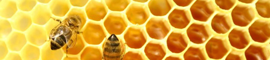 abelles.AG-13