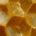 abelles.AG-central